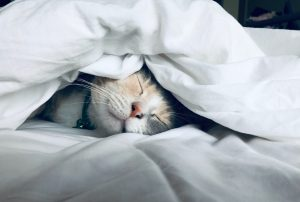 Cat under bed covers sleeping.