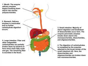 enyhe makrocita anaemia