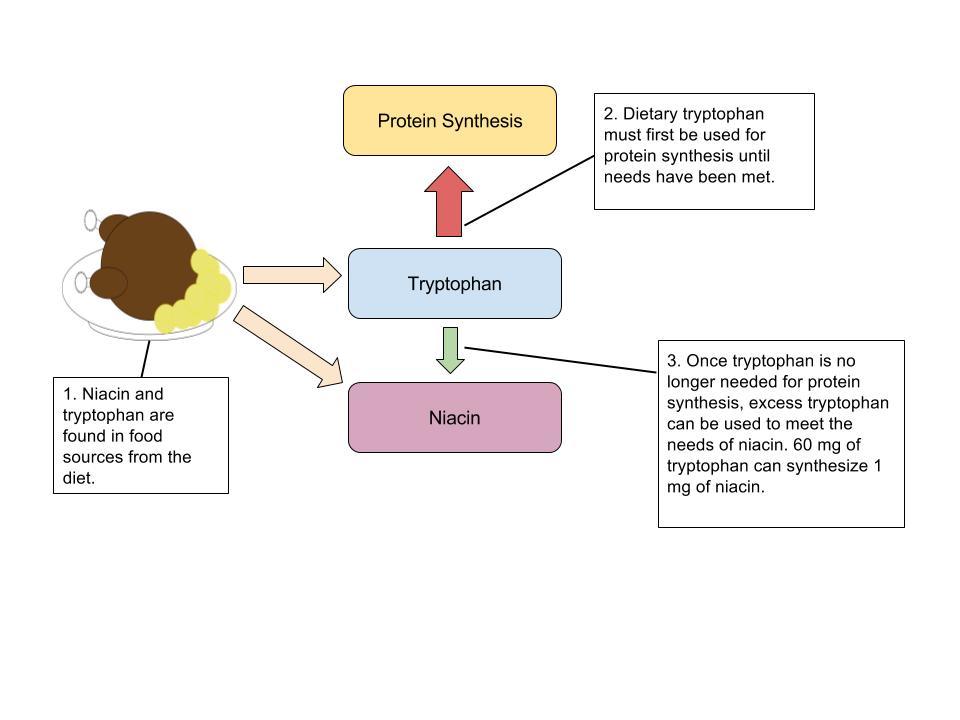 Conversion of Niacin to vitamin B3