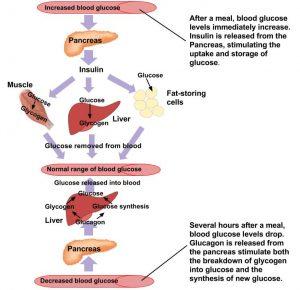 enyhe makrocita anaemia)