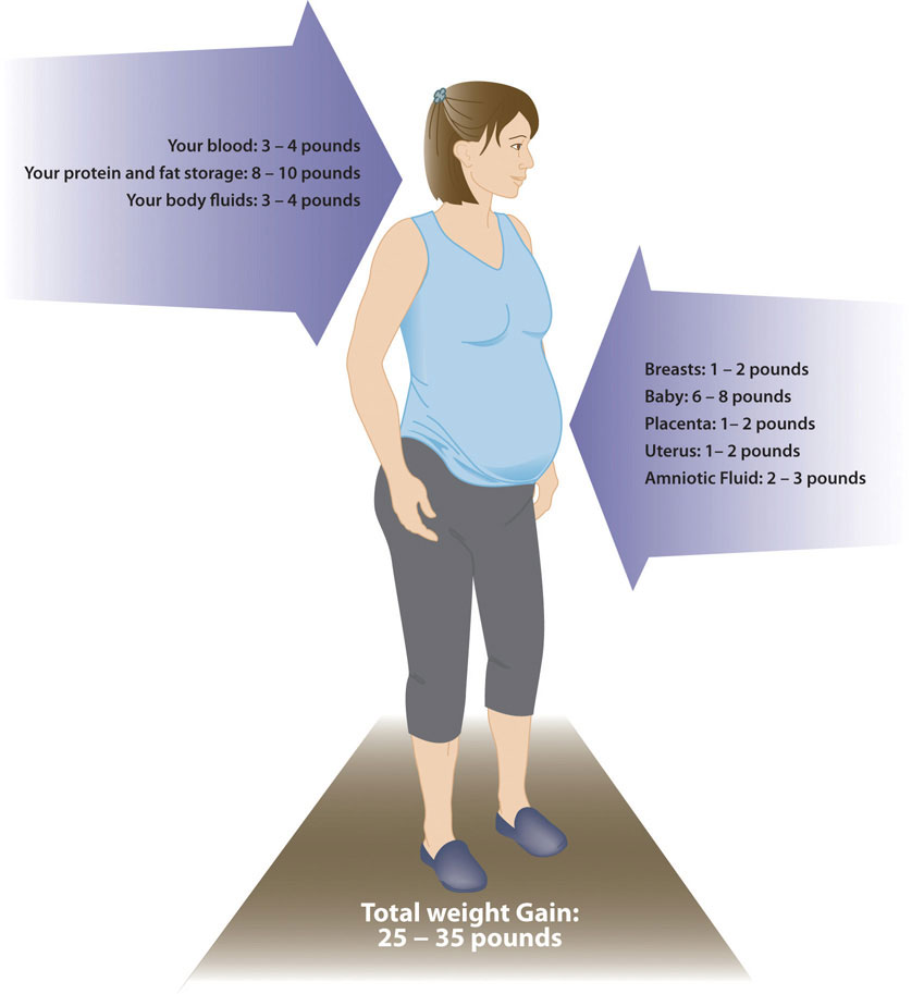 Figure of woman with labels of areas of weight gain