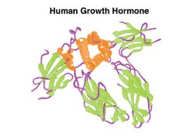 Human Growth Hormone example