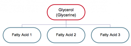 Glycerol (Glycerine) at the top and at the bottom, Fatty Acid 1, Fatty Acid 2, Fatty Acid 3