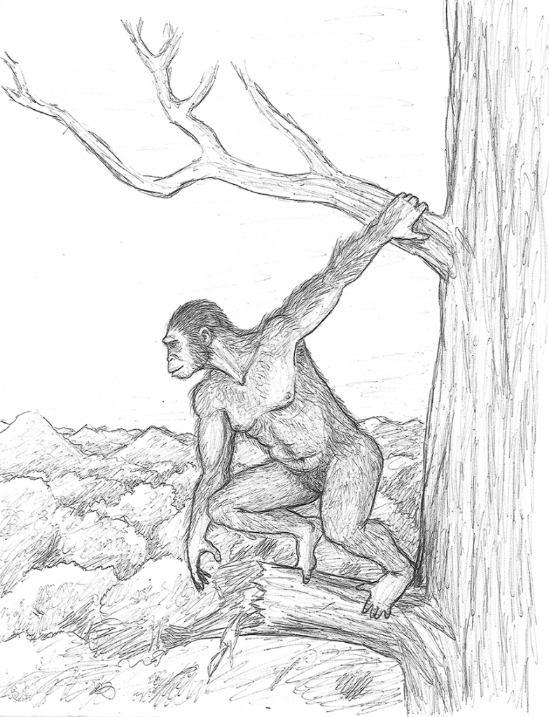an illustration of an ape hanging from a tree branch