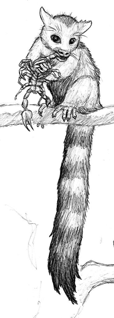 Sketch of Eosimias sinesis