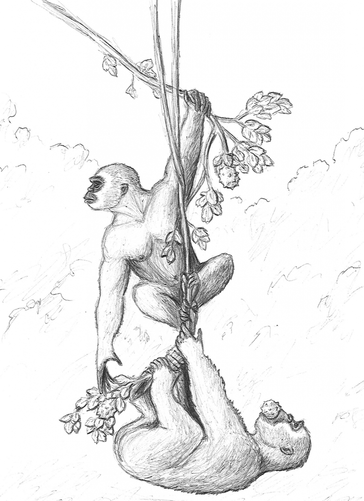 illustration of two apes hanging from a vine