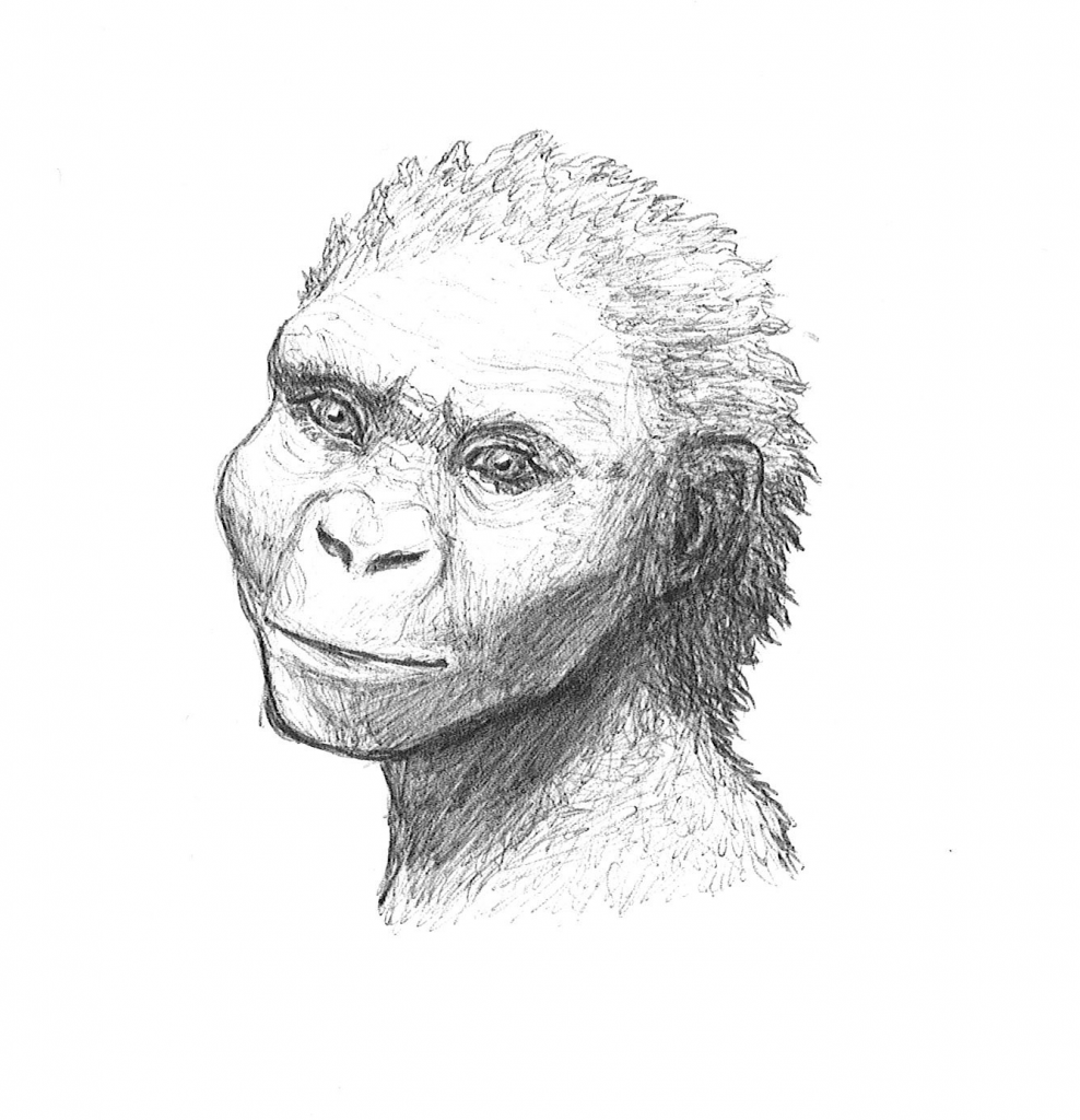 an illustration of a young ape smiling