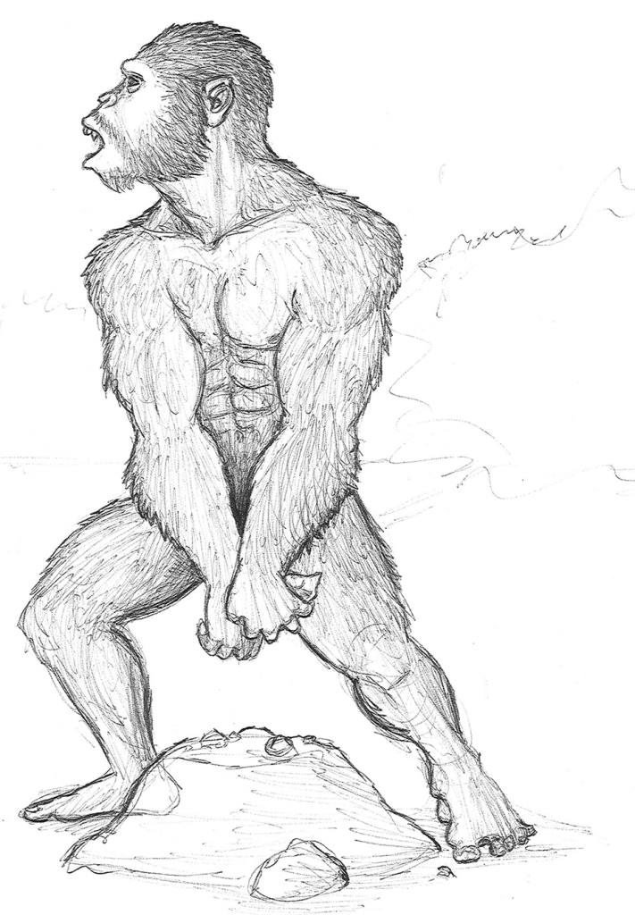 sketch of Australopithecus aethiopicus tool use