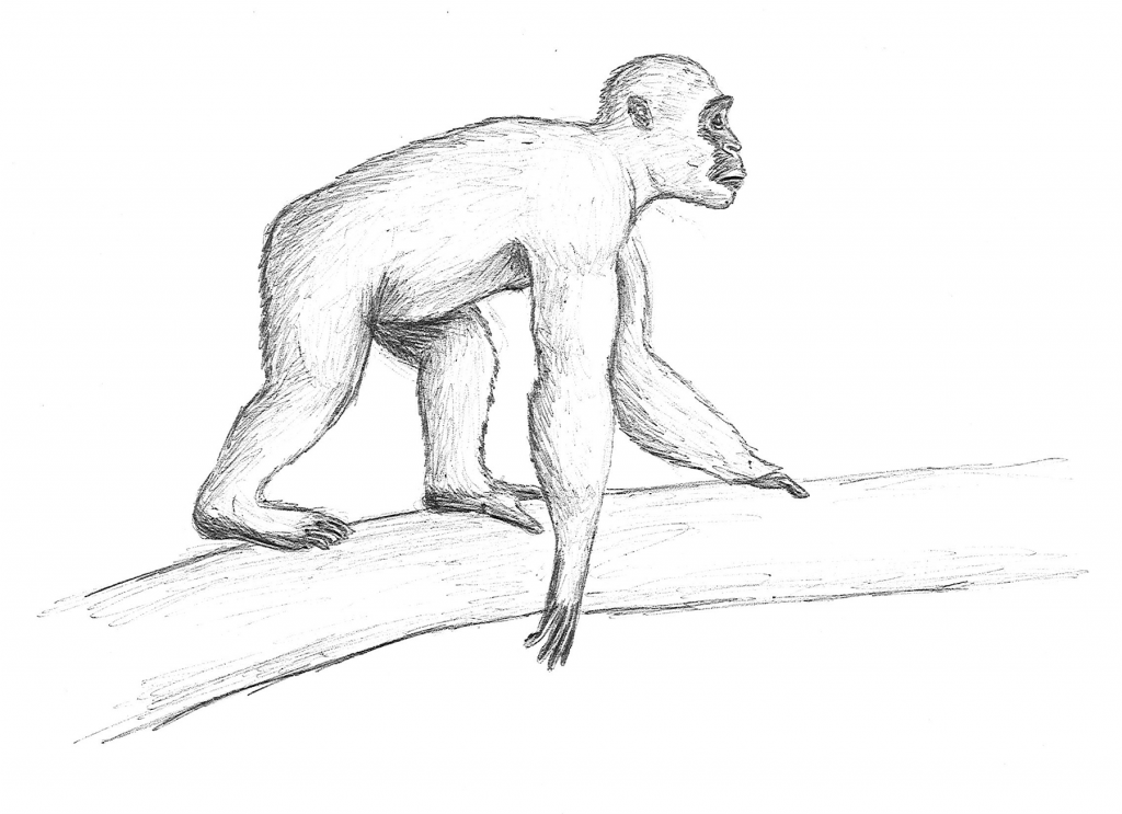 illustration of ape on a tree branch