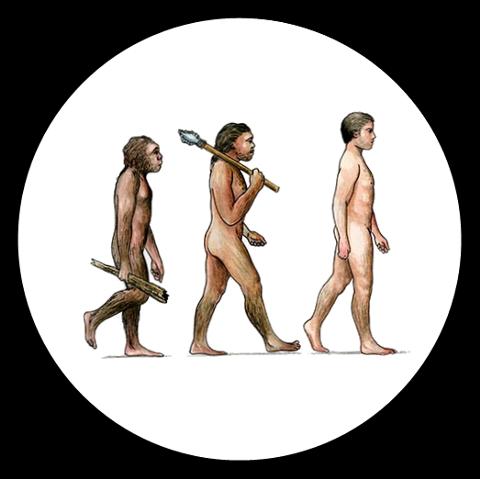 image of human evolution