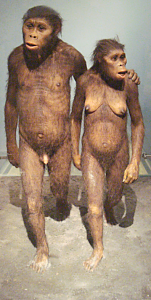 a male and female ape walking together, the male has his arm around the female.