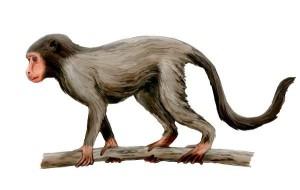 Sketch of Aegyptopithecus or Propliopithecus zeuxis.
