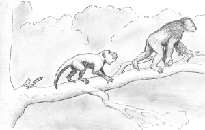 Pencil sketch of Anthropoid Evolution by Keenan Taylor.