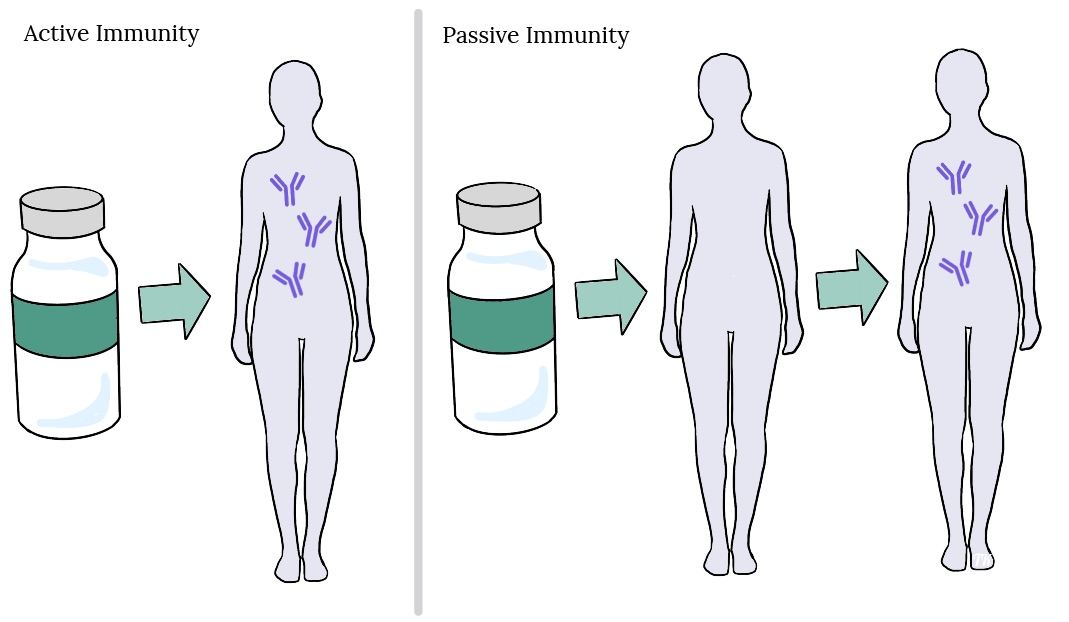 What is Immunity? – Vaccine Practice for Health Professionals: 1st Canadian  Edition